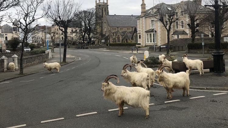 animales en la ciudad 1