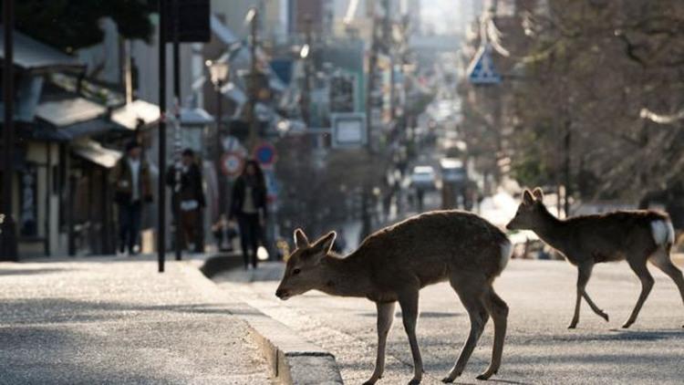 animales en la ciudad 2