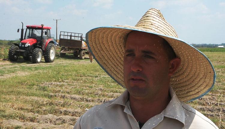 Eduardo Diego Cruz, fue el productor que asumió el reto de plantar las 27 ha en la UEB Hermanos Barcón, insiste en que el cultivo requiere mucha disciplina. / Foto: Yolanda Molina Pérez