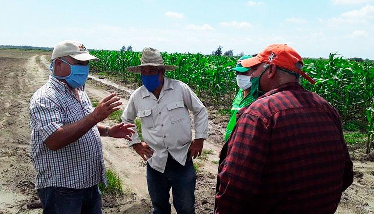 Siembra y venta de productos agrícolas en Pinar del Río