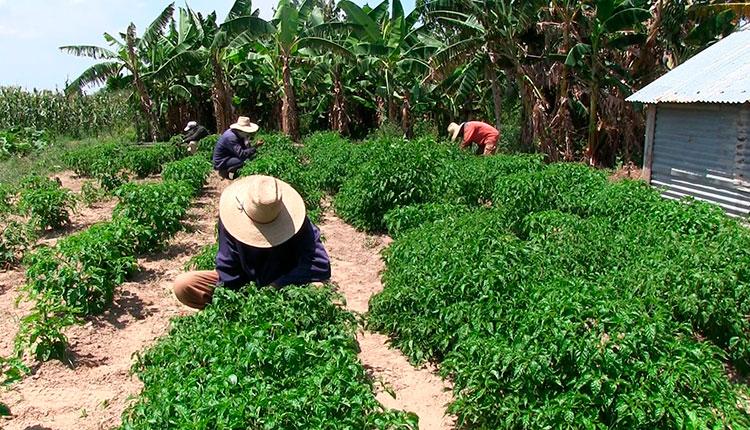 Elevan rendimiento de tierras cultivables