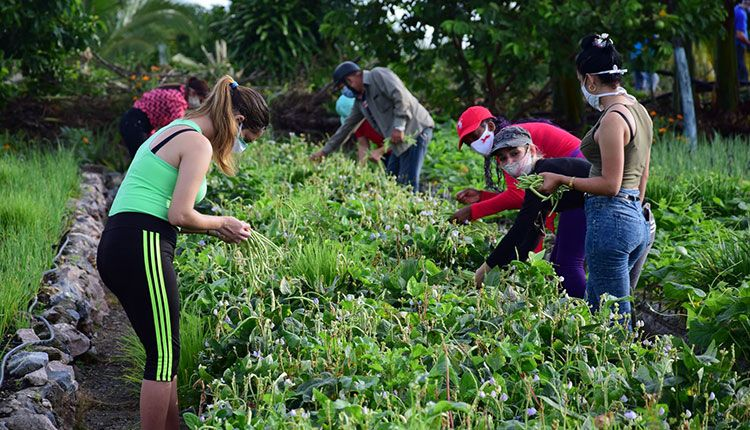 Tributar a la producción de alimentos es una de las prioridades de la UJC en este período