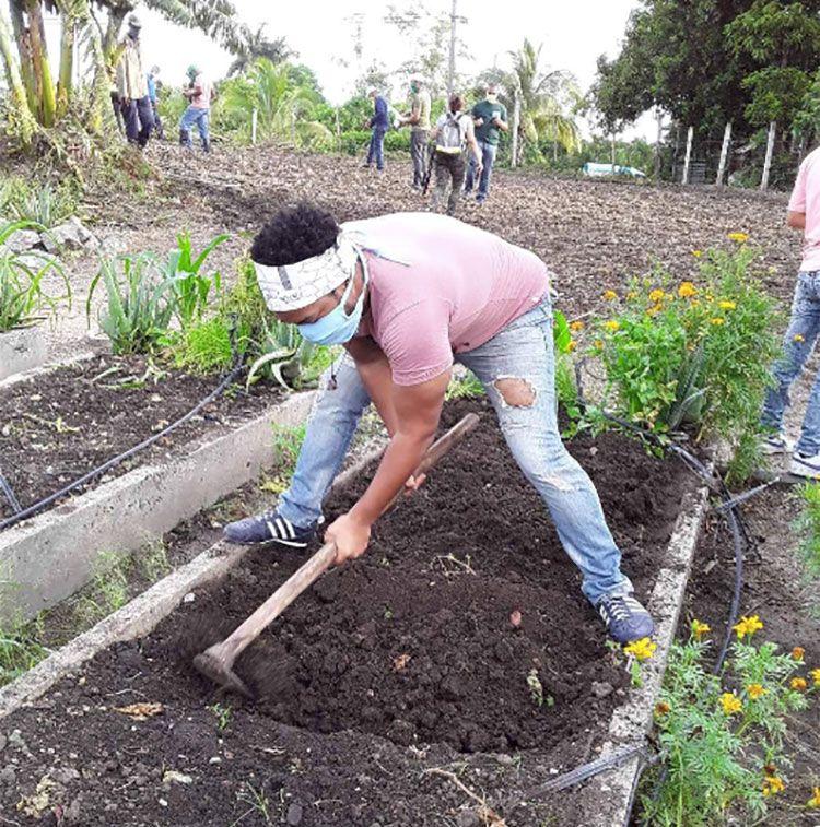 Brigada José Martí apoya producción de alimentos