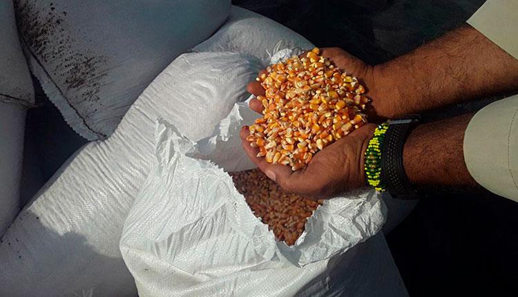 El Sembrador por más alimentos en Pinar del Río
