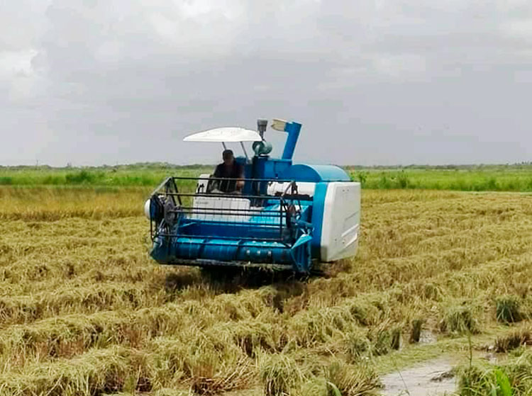 maquinaria de arroz