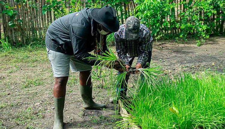 Chichimbel, un proyecto agroecológico sostenible en Pinar del Río