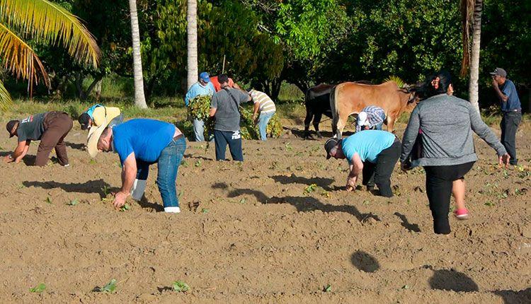 Trabajadores de la sede del Gobierno Provincial, pertenecientes al sindicato de la Administración Pública, participan en labores agrícolas en el polo productivo Hermanos Barcón