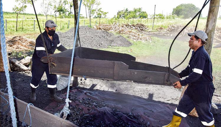 La empresa pecuaria genética Camilo Cienfuegos incrementa sus utilidades con la exportación de carbón de marabú.