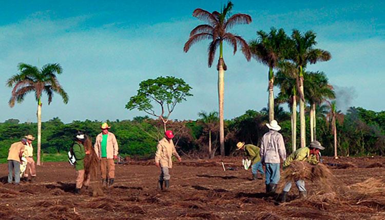 Pinar del Río apuesta por una buena siembra de tabaco
