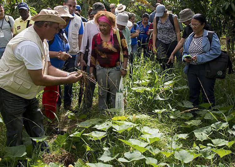 La finca Tierra Brava implementa hace tres años técnicas agroecológicas de agricultura de conservación. / Foto: Ismael Francisco. Cubadebate.