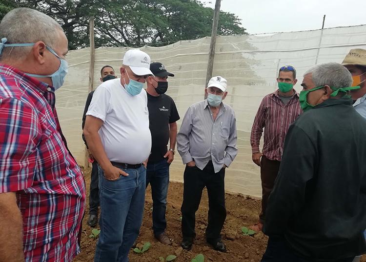 La disminución del plan de siembra de tabaco para la provincia ha de ser un acicate para obtener mejores rendimientos y mayor calidad.
