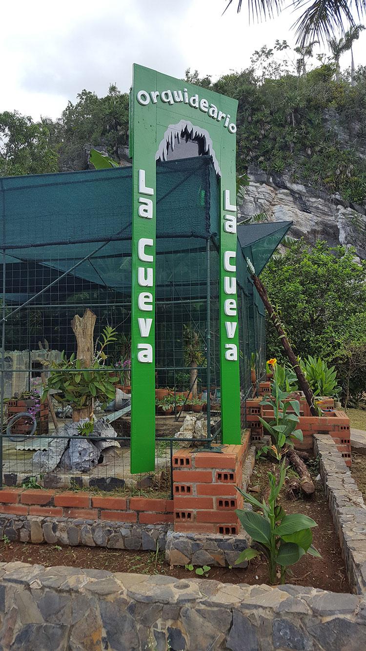 En el orquideario cultivan 35 especies, todas endémicas / Foto: Cortesía de Yosbel Fernández Martínez