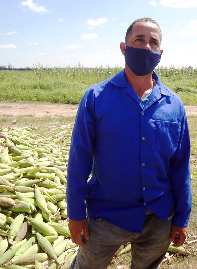 Eduardo dedica 20 hectáreas al cultivo del maíz y 14 al boniato, este último lo debe empezar a cosechar a finales de abril.