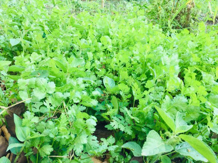 Zanahoria, perejil, yuca, tomate, girasoles, habichuelas, son algunos de los alimentos que conforman los sembrados.