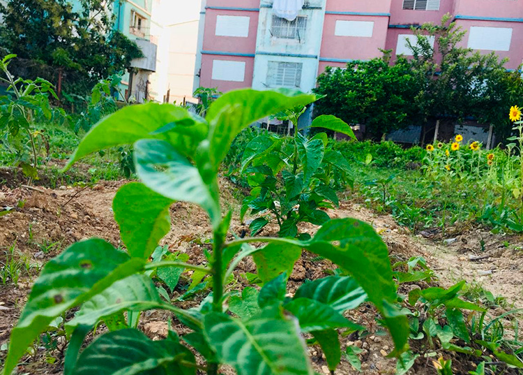 agricultura pinar urbana4