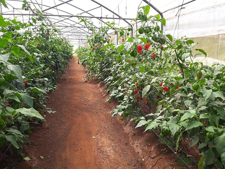 Casa de cultivo.