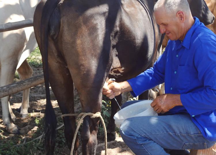 Polo productivo Hermanos Barcón en Pinar del Río avanza en la cosecha de cultivos varios