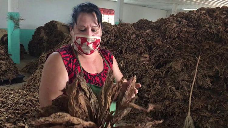 A raíz de la Tarea Ordenamiento, los obreros directos a la producción tienen un salario básico de 2 810 pesos, a esto se suma el pago por resultados.