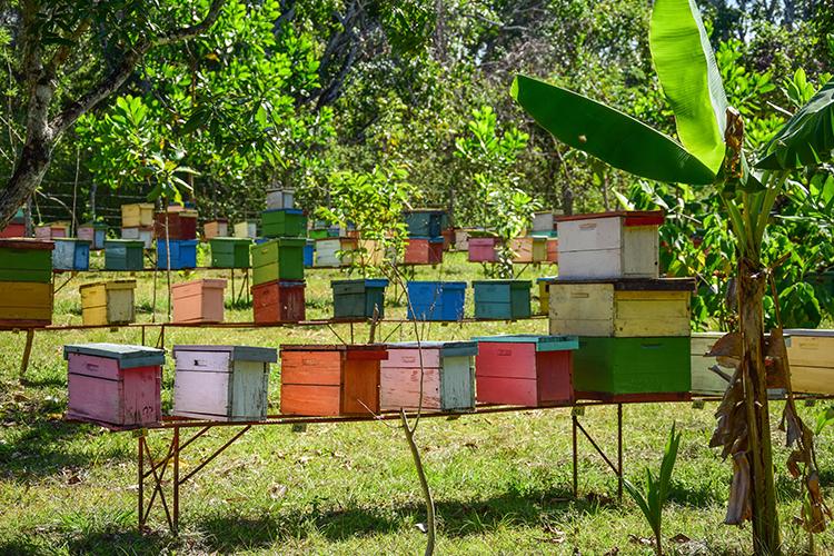 En Pinar del Río existen 365 apiarios de producción ubicados cada tres kilómetros.