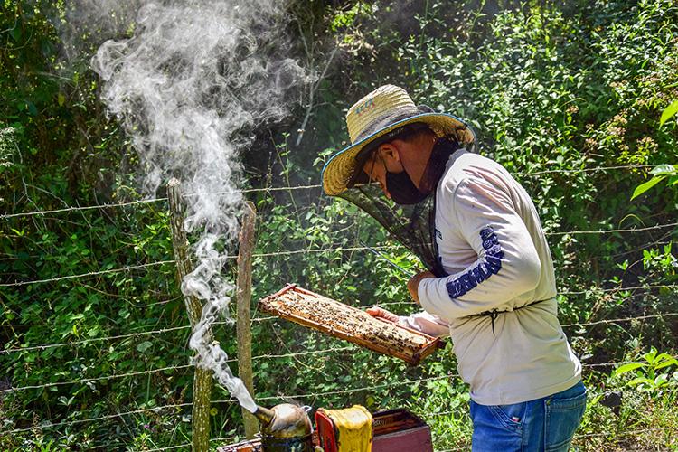 Apicultores en Pinar del Río en la avanzada