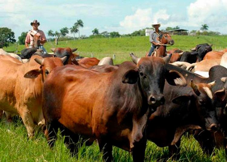 Una de las medidas que más impacto ha tenido en la población es la relacionada con la comercialización y autoconsumo de carne bovina. / Foto: ACN