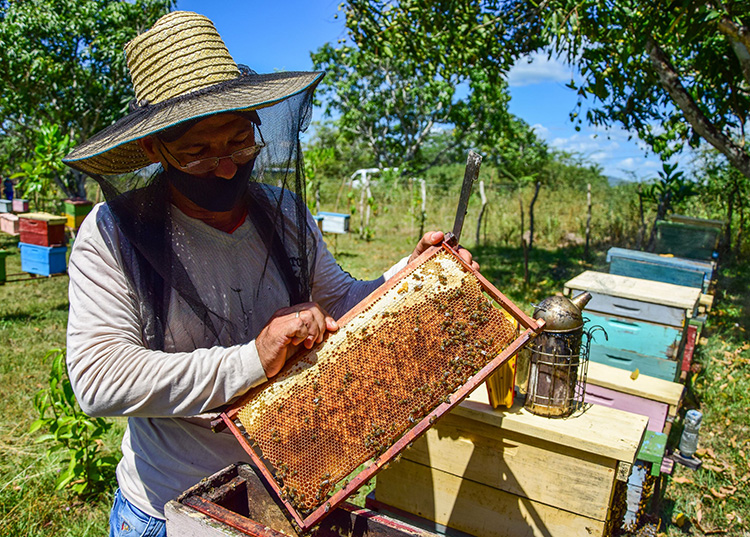 Prevén en Pinar del Río buen año en la producción de miel