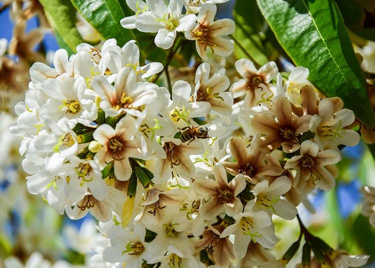 La intensa floración de algunas especies ha favorecido la producción de miel en la provincia