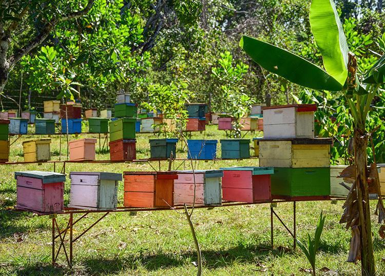 La intensa floración de algunas especies ha favorecido la producción de miel en la provincia / Foto: Januar Valdés Barrios
