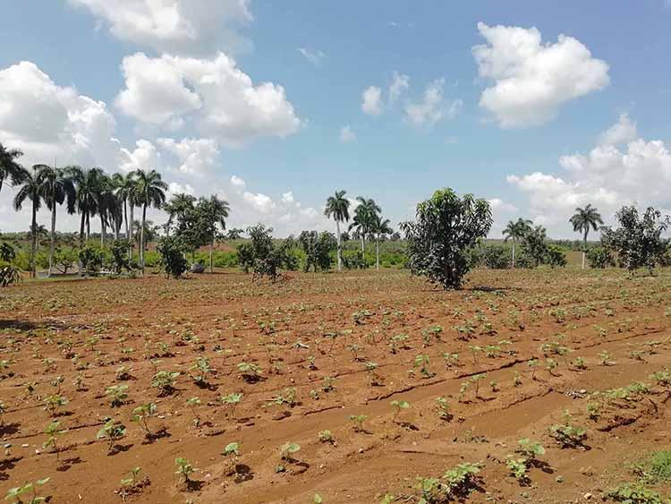 El aprovechamiento de las superficies cultivables es una de las prioridades para lograr el autoabastecimiento territorial.
