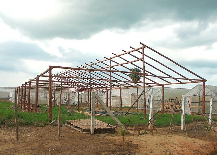 La construcción de las casas de cultivo rústicas en la UEB Semillas estuvo a cargo de los trabajadores lo que abarató los costos de las mismas, las que representan un potencial para mantener durante todo el año la producción de hortalizas / Foto: Pedro Paredes Hernández