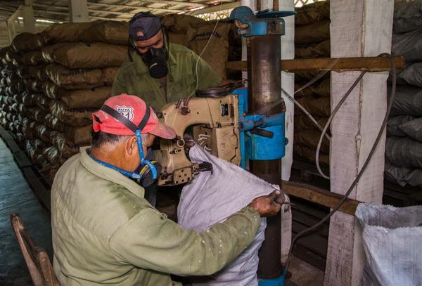 Carboneros durante el beneficio del carbón con destino a la exportación, en La Palma, Pinar del Río, Cuba, el 3 de abril de 2018.