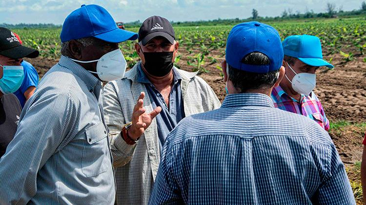 Valdés Mesa: multiplicar rendimientos agrícolas desde la planificación e integración (+Fotos)