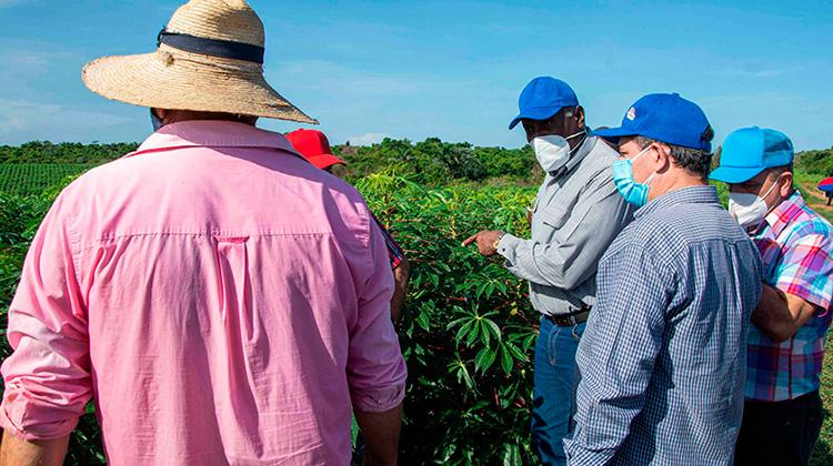 Valdés Mesa en Pinar del Río: multiplicar rendimientos agrícolas desde la planificación e integración (+Fotos)