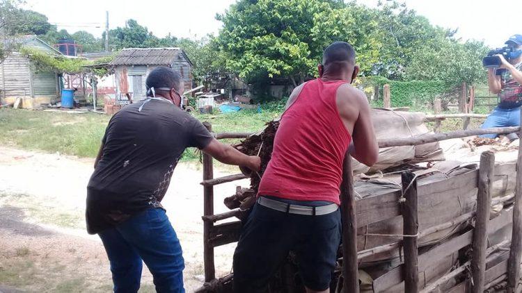 trabajadores de la UEB de Las Ovas 3